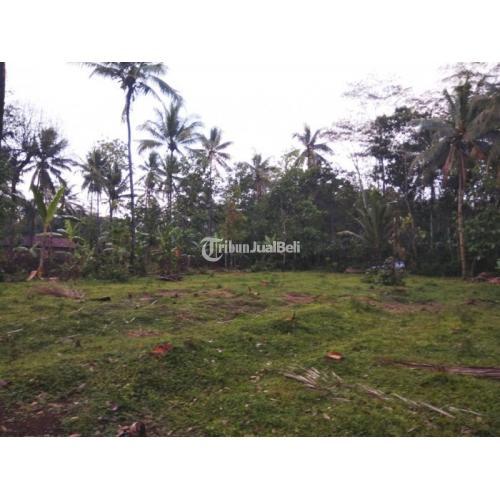 Dijual Tanah Perkebunan Produktif di Kabupaten Semarang Harga Murah - Semarang