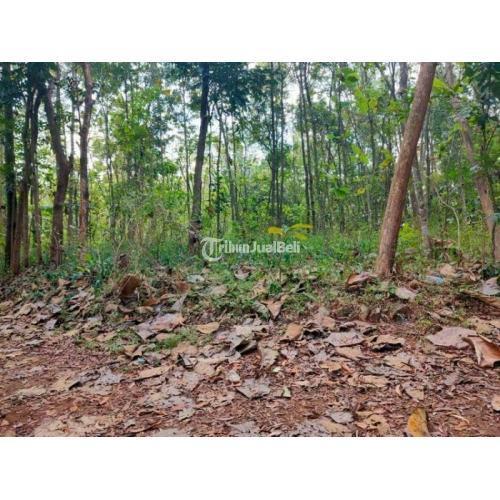 Dijual Tanah Kebun Jati Luas 1375m² SHM Mojogedang - Karanganyar