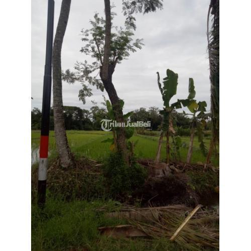 Dijual Tanah Murah Babadan, 500m ke Jl Raya Krapyak Wedomartani - Sleman
