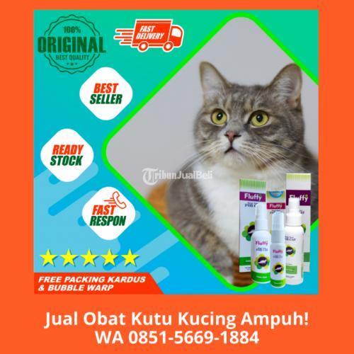 Obat Kutu Kucing Yang Bagus Terbuat Dari Bahan Alami - Depok