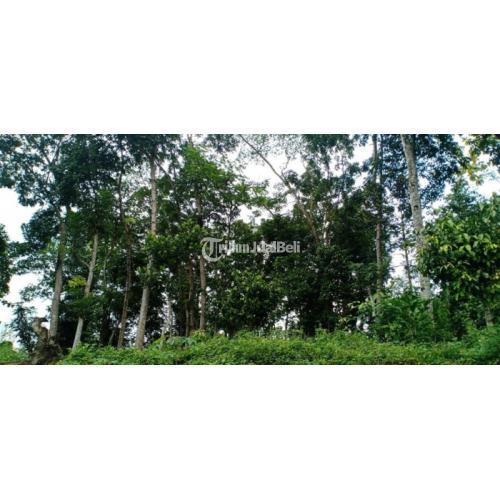 Dijual Tanah Datar 1520m2 Dekat Pasar Mojogedang - Karanganyar