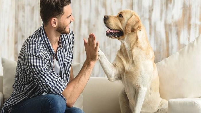 3 Cara Bermain Bersama Hewan Peliharaan Agar Lebih Seru