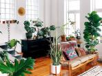 Ide Dekorasi Ruangan di Rumah Minimalis dengan Letakan 3 Tanaman Hias Ini