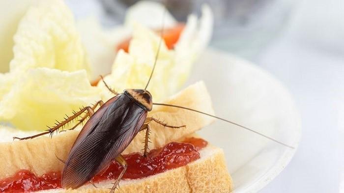 Dapur Bebas Serangga, Usir Kecoak, Semut, Lalat, dan Tikus dengan 5 Cara Ini